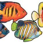 Under Sea Fish Coral 4ct
