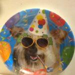 Dog Dessert Plates